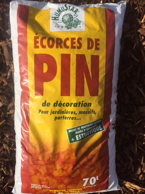 Ecorce de pin